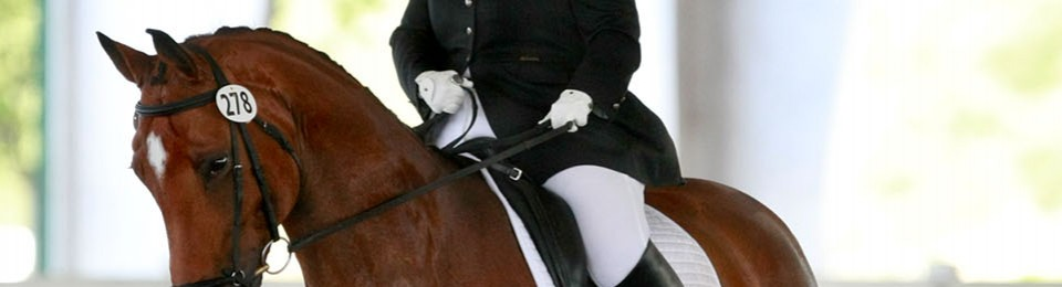 Tag Archives: adult amateur dressage rider. back to Callista….Yes!
