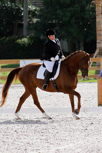 Posted by halfpass in adult amateur rider, Dressage, Dressage Process, ...